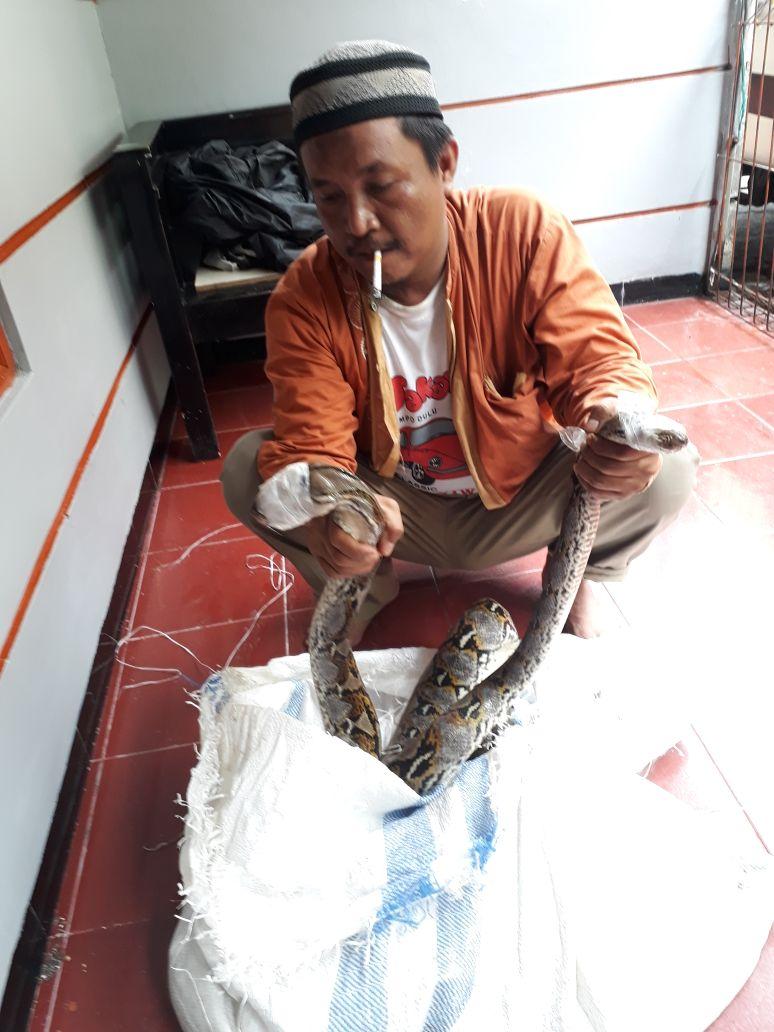heboh ular phiton masuk rumah di kayu manis matraman